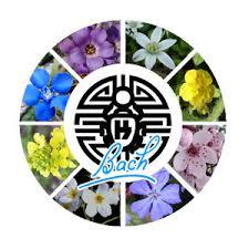 flores_22