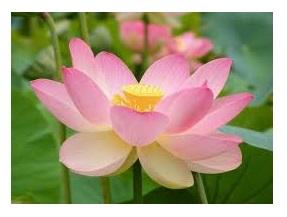 flores_4