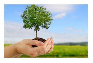 Plantar-Arbol-Importancia